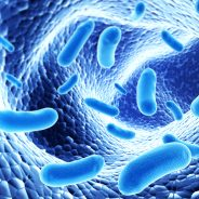Probiotics: Enhancing the Impact of Lifestyle Changes in Metabolic Syndrome